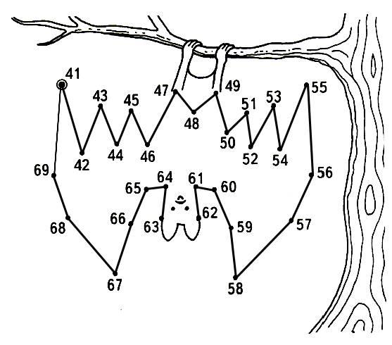 Соедини отрезки точками по порядку номеров, начиная с точки № 41.