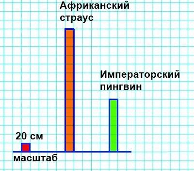 Построй в тетради диаграмму, на которой будет показана высота птиц. Изображай 20 см высоты птицы одной клеткой.